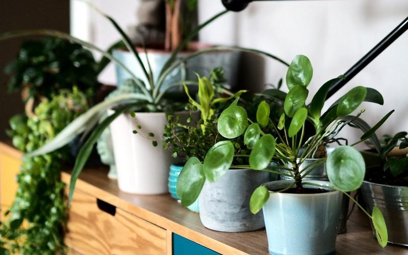 5 conseils déco pour se sentir bien chez soi : du jaune, des plantes, des souvenirs... ©aunomi