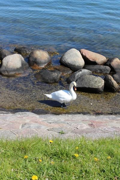 Copenhague en amoureux ©aunomi
