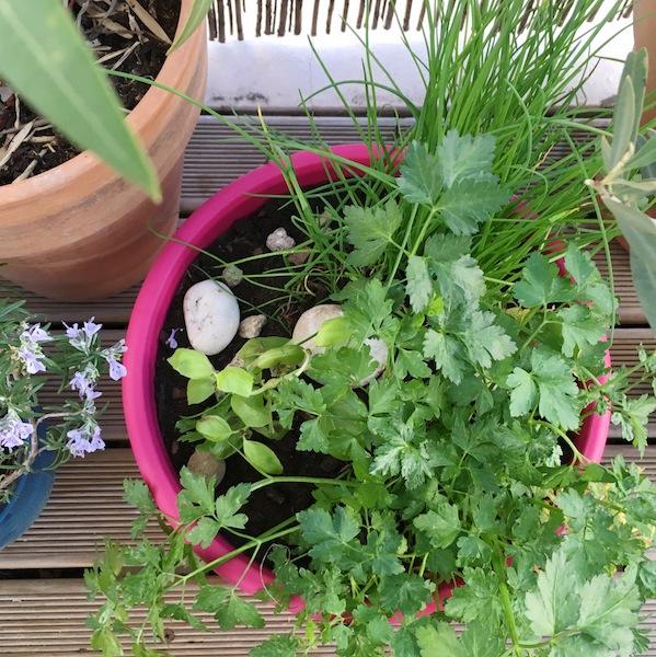 Un jardin dans son appartement - plantes, fleurs, fruits et legumes ©aunomi - aromates
