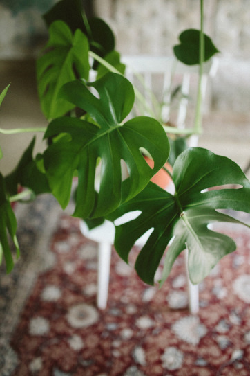 Plante intérieure - ©Herz und Blut