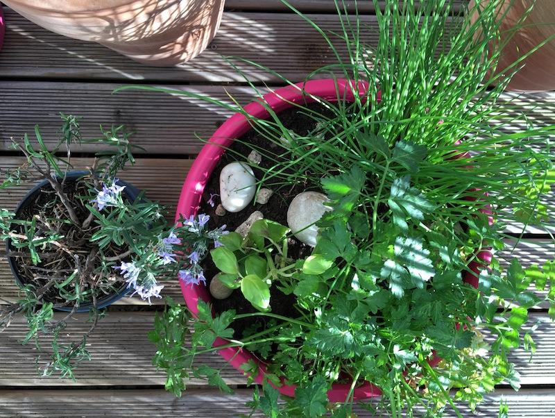 Un jardin dans son appart - aromates ©aunomi