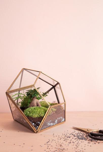 Terrarium ©Mamie Boude